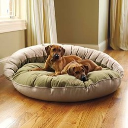Different Types Of Dog Beds For Large Dogs That Offer Cozy