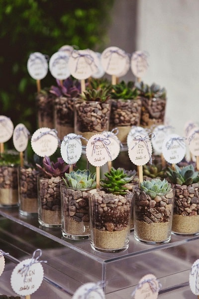 Gift small plantlets to your guests - A2zWeddingCards