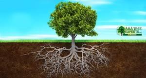Tree-Root-Damage