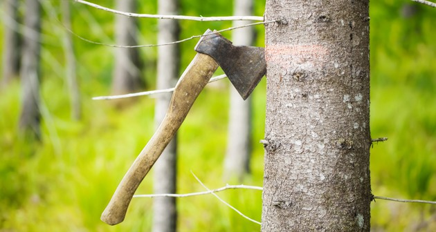 All That You Need To Know About the Hazards of Tree Removal