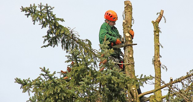Tree Topping – All That You Need To Know About