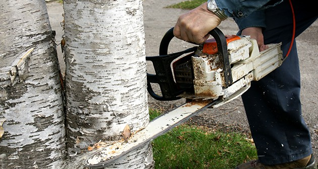 A Quick Guide to Tree Removal