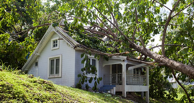 What you should know about tree removal & Insurance