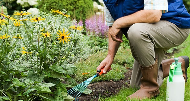 A Guide to Plan a Perfect Spring Garden