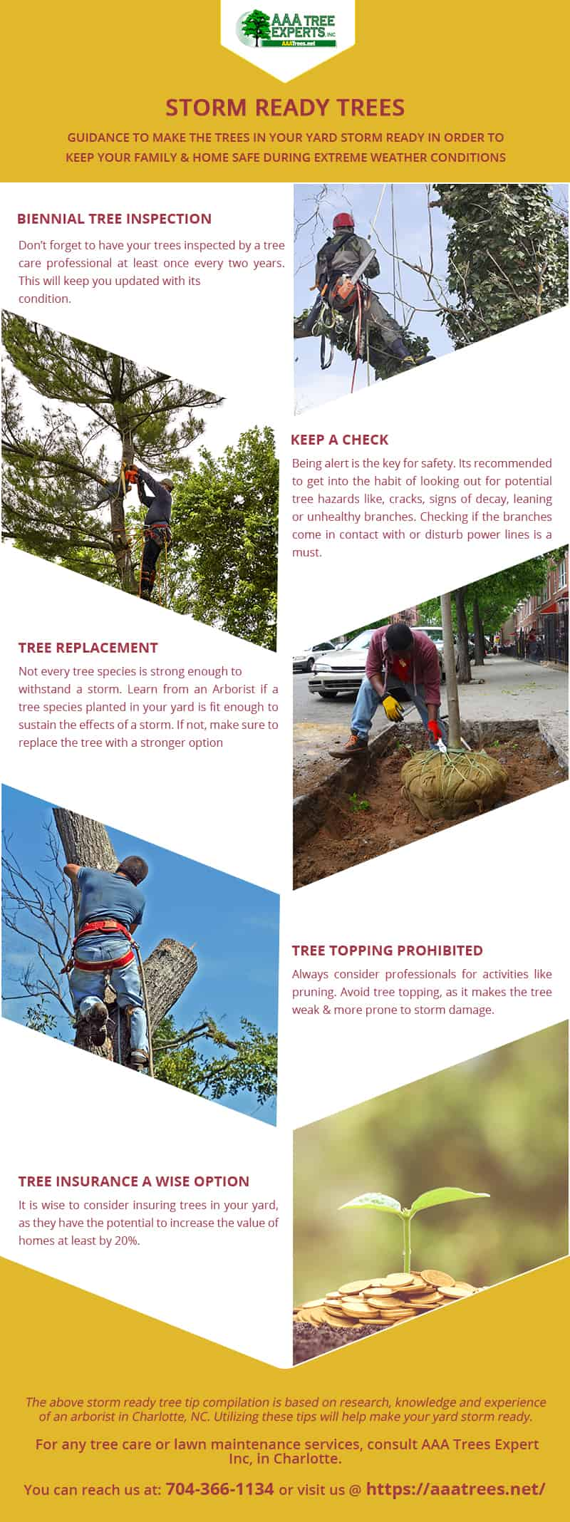 How to Prepare your Trees for Storm Season