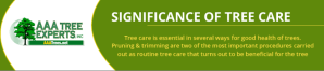 Significance of Tree Care