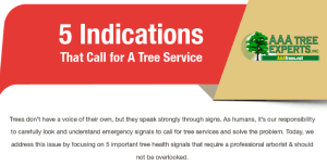 5 Indications That Call for A Tree Service