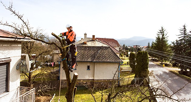 Essential Information for Pruning and Trimming of Young Trees
