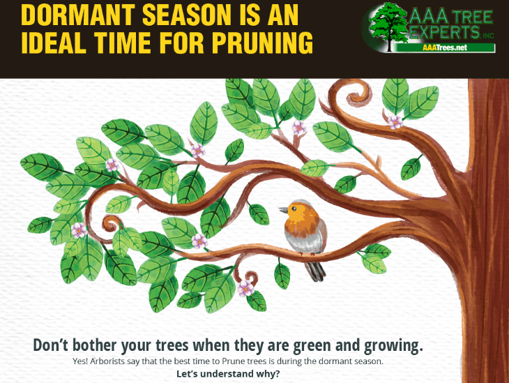 Dormant Season is an Ideal Time for Pruning