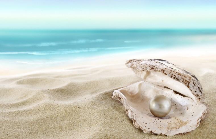 seashell-pearl-beach