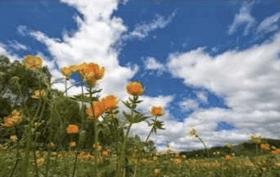 Orange flowers, for 2018 meditation retreat hosted by Ann Arbor Center for Meditation.