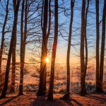 bare trees with light shining through to represent the clarity of mindfulness