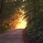 picture of sunlight in clearing on road