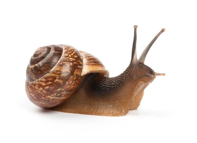 Snail problem in my garden