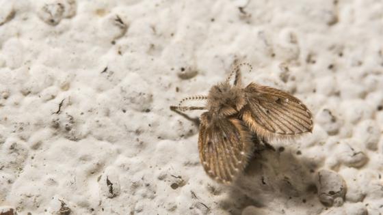 meal moth problem-32268