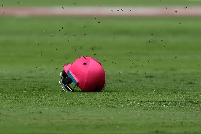 south africa and sri lanka match stopped as huge amount of bees came inside ground