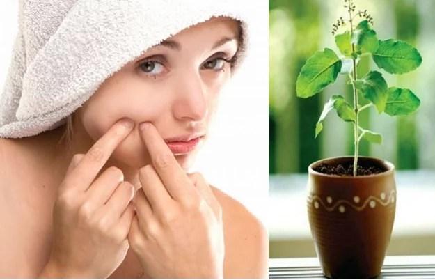 तुलसी के फायदे चेहरे के लिए - Tulsi for skin