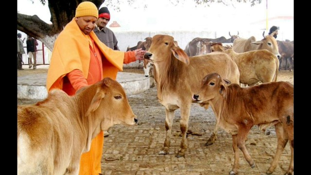 Image result for yogi adityanath with cow