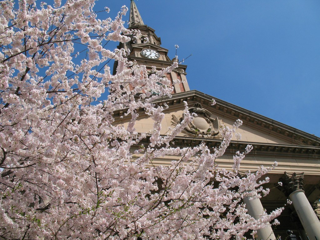 Blooming cherry tree in front of All Souls Unitarian Church (1924, Coolidge & Shattuck) at 16th and Harvard Streets NW. Photo by Mr.TinDC (Flickr) CC BY-ND 2.0