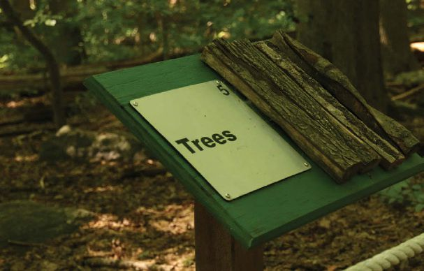 Image of a sign plaque with green backboard that says Trees with a sample of wood bark attached.