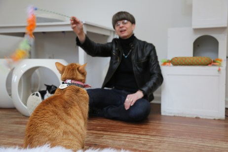 CFM director Elizabeth Merritt at the Crumbs & Whiskers cat adoption cafe in Washington, DC.