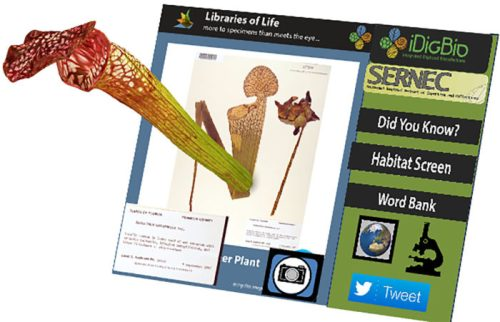The Libraries of Life interface is seen, with a plant specimen on screen. An augmented reality version of the plant appears to pop out of the screen, allowing the user to examine it at its real-life size and from any angle.