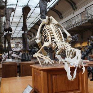 A dinosaur exhibit inside a museum