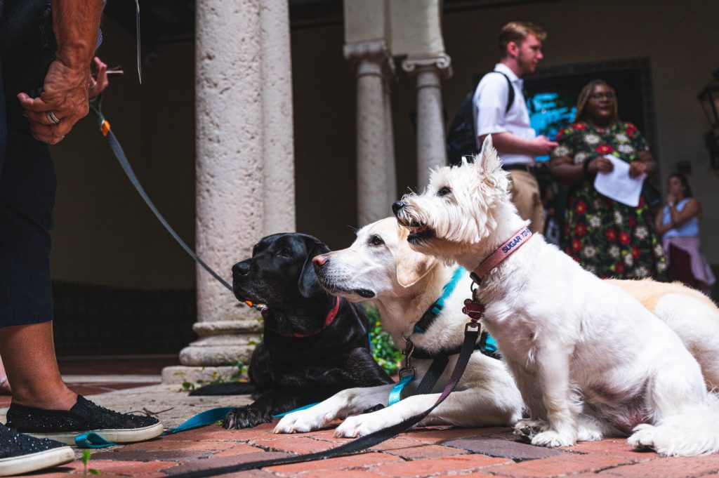 A group of three dogs on leashes in a courtyard space with columns