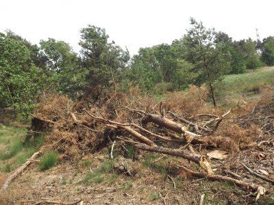 Opnieuw grondruil Staatsbosbeheer: nu Limburgs Landschap, omzeiling aanbestedingsplicht?