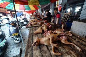 Brutality at its peak: Yulin dog-eating festival