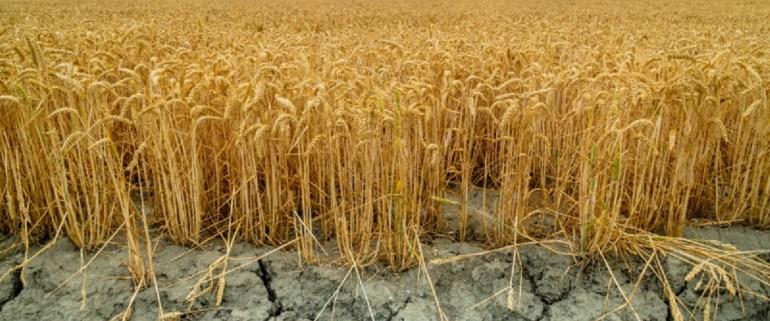 eda i izmenenie klimata