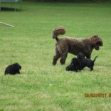 Karina and pups