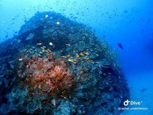 Reef (4)