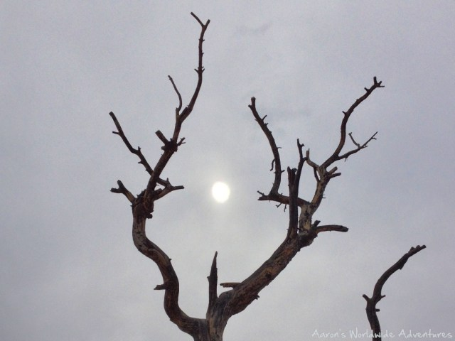 The sun, dramatically set between branches of a dead tree at Utah's Bryce Canyon National Park