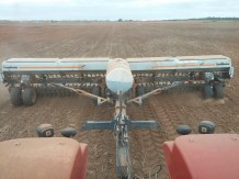 Drilling wheat
