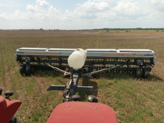 Driling cover crop