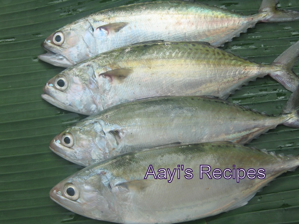 surmai fish english name images