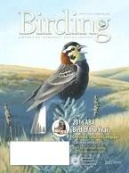 Birding Online: February 2016
