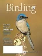 Birding Online: April 2016
