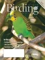 Birding Online: August 2015