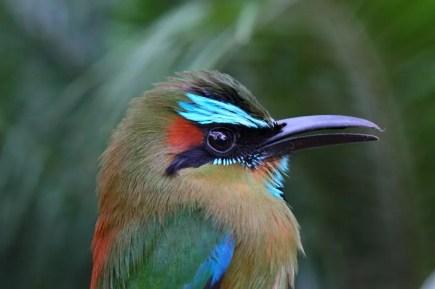 05_birdgallery