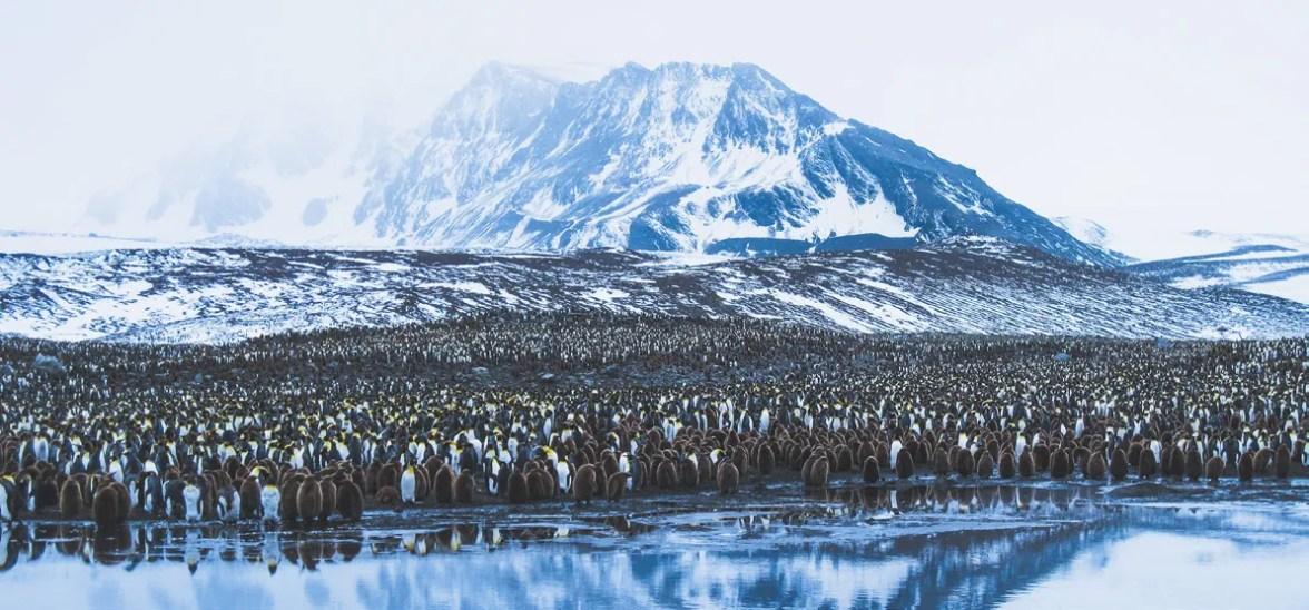 South Georgia King Penguin Colony