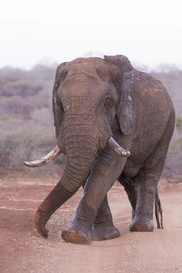 Elephant-MPGR-AR