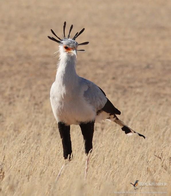 Secretarybird by Markus Lilje