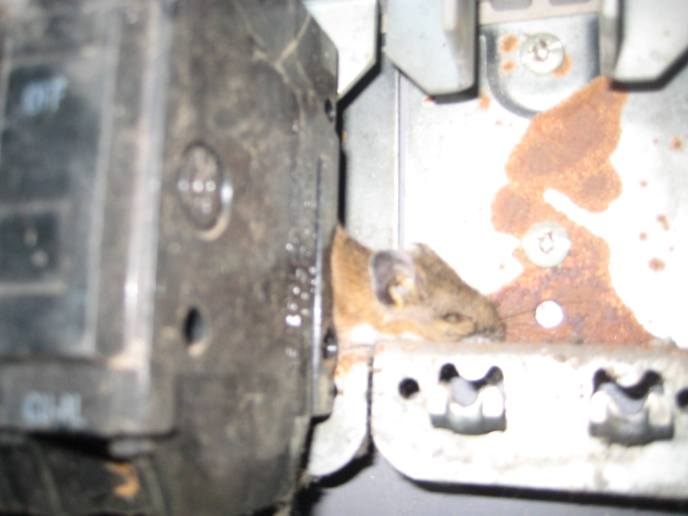 Protect your wiring from rodents