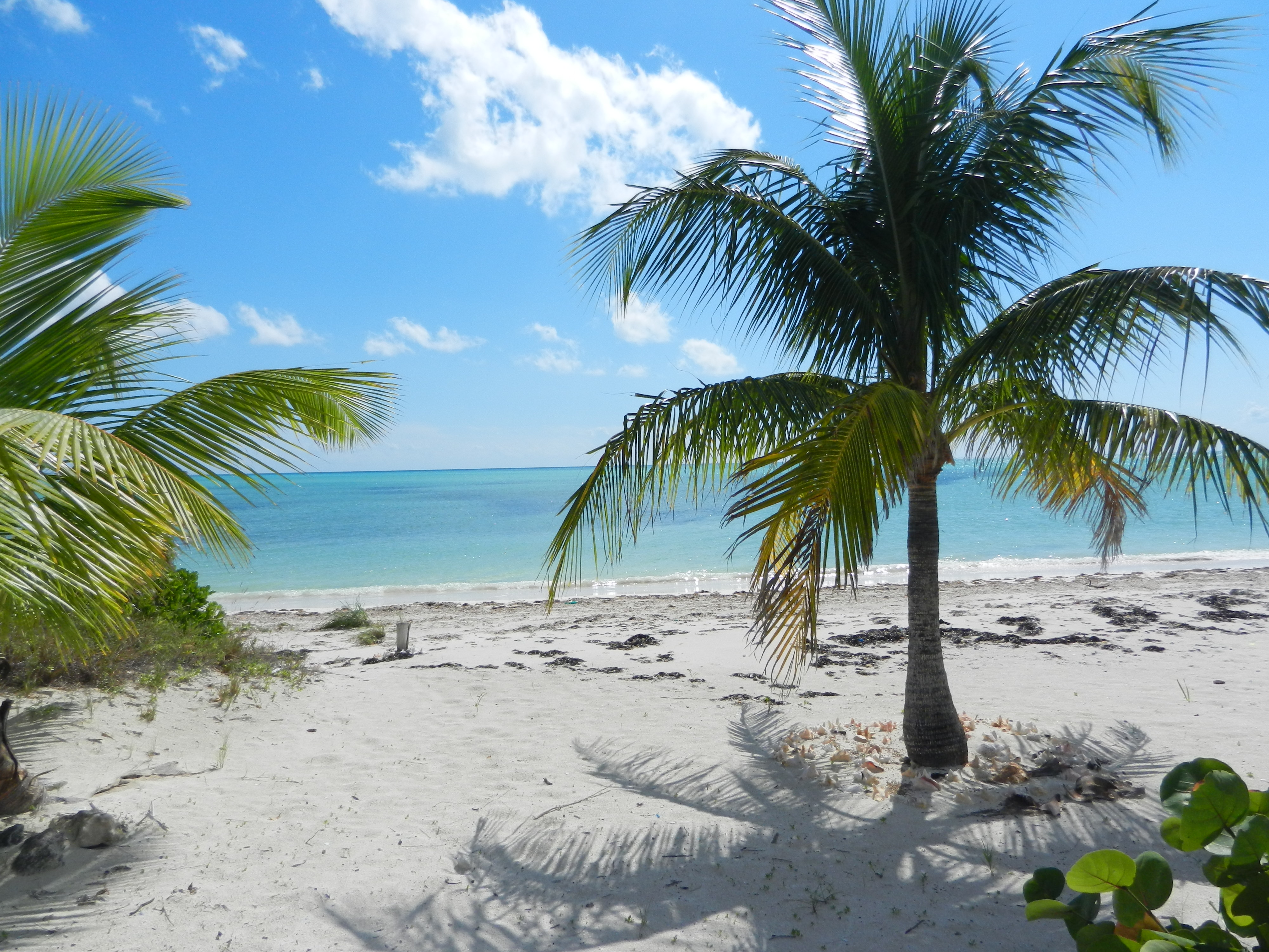 Calypso's Beach has soft white sand, gentle shallow water, and beautiful coconut trees.