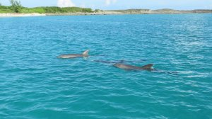 A pod of Dolphin greeted us when we went to Little Bay last week!  What a treat!