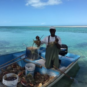 Links Adderley with a boat load of Lobster!