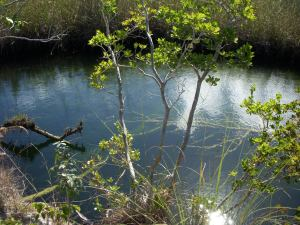 Blue Hole across from the Coconut Tree Farm - 8.1 miles north of the Casuarina Point entrance.