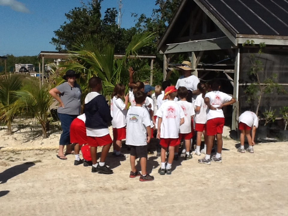 School Children learning about growing organic fruits and vegetables.